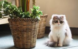 Cat Fluffy Pots Plant