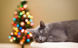 Cat Gray Rest Christmas Tree Lights Bokeh Holiday New Year