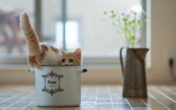 Cat in Pot Wallpapers Pictures Photos Images. «