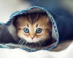 Cute Cat Inside Jeans