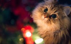 Close-Up Cat Lights Photo HD Wallpaper