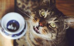 Cat Look Cup HD Wallpaper
