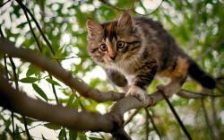 Animal-wallpapers-Cat On Tree-wallpaper