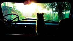Cat Passenger Wallpaper in 2560x1440 HD Resolutions