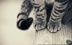 Cat Paws 1