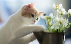Funny Cat Planting Flowers HD Desktop Wallpaper