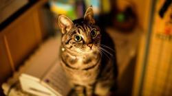Cat pop eyes Wallpaper in 1600x900 HD Resolutions