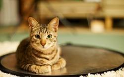 Cat Room Rest