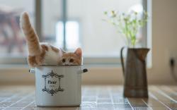 Cat Saucepan Vase Flowers