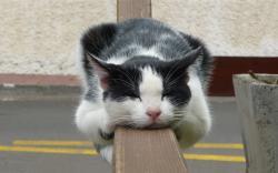 Cat sleep beam