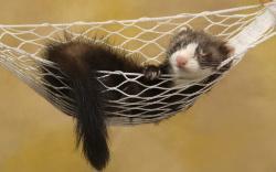 Ferret Sleep Hammock