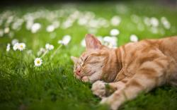 Cat sleep in grass