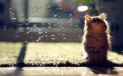 Cat soap bubbles