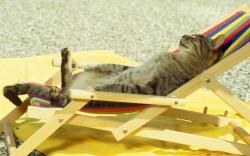 Cat sunbath chill