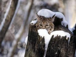 Drowsy Cat in a Tree Trunk