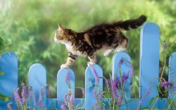 Cat walk over garden fence