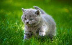 HD Wallpaper   Background ID:408941. 2880x1800 Animal Cat