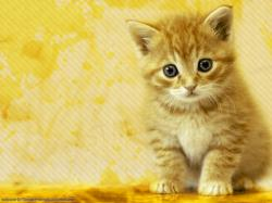 cat wallpaper 15 Best Wallpaper
