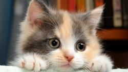 Cat HD Wallpapers