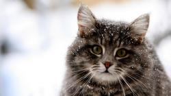 Cat Wallpapers 9272