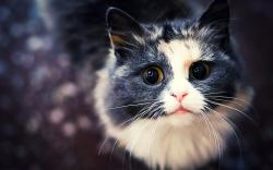 View And Download Cat Wallpapers