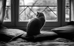 Cat watching outside