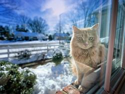 Cat winter sunshine Wallpaper in 1920x1440 Normal