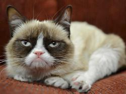 Judas Priest man, can't a cat be grumpy for one day?