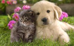Who says that cats and dog only fight with each other? In these cute and cuddle pics, man's best friend and his biggest adversary forget about their ...