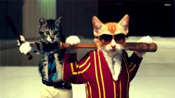 ... Funny cats wallpaper 1920x1080 ...
