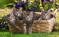 Cats in a basket Photograph