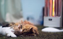 Cats Floor Sleep Heater