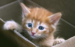 If your new kitten came from the shelter or a reputable rescue organization, then he or she will already have been sterilized, but there are still many ways ...