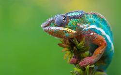 Chameleon- Photo#04