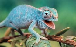 Chameleon Photography id 23330