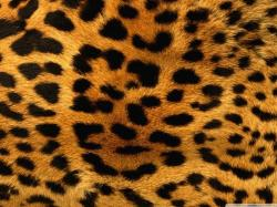 cheetah fur wallpaper