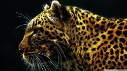 Cheetah Wallpaper 1920X1080 x Cheetah In Fire