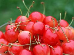 Fruit Cherry Fruit Wallpaper