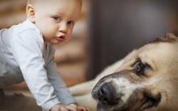 Child Boy Dog