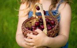 Child Girl Cherry Basket