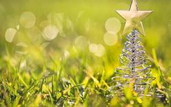 Christmas Tree Toy Star Grass