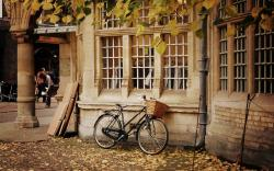 City Bicycle Basket Autumn Leaves