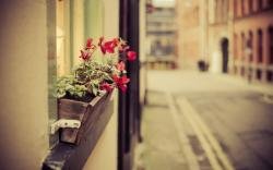 City Street Flowers Photo
