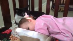 Kitty Cleaning Toddler