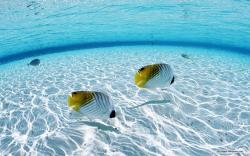 Free Nature wallpaper - Clear Water And Blue Sky 2 wallpaper - 1280x800 wallpaper - Index