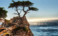 Cliff Tree Coast