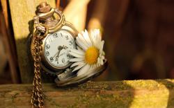 Clock Time Daisy Flower