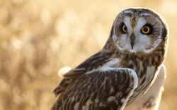 Bird Owl Close Up HD Wallpaper