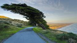 Coast trees Wallpaper in 1920x1080 HD Resolutions