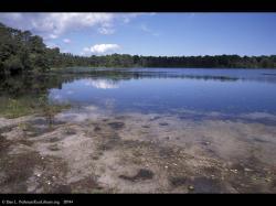 Coastal plain pond, Cape Cod, Massachusetts